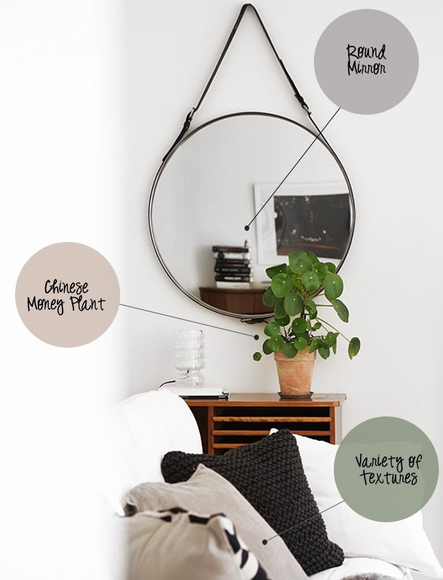 Chinese Money Plant Archives Happy Interior Blog