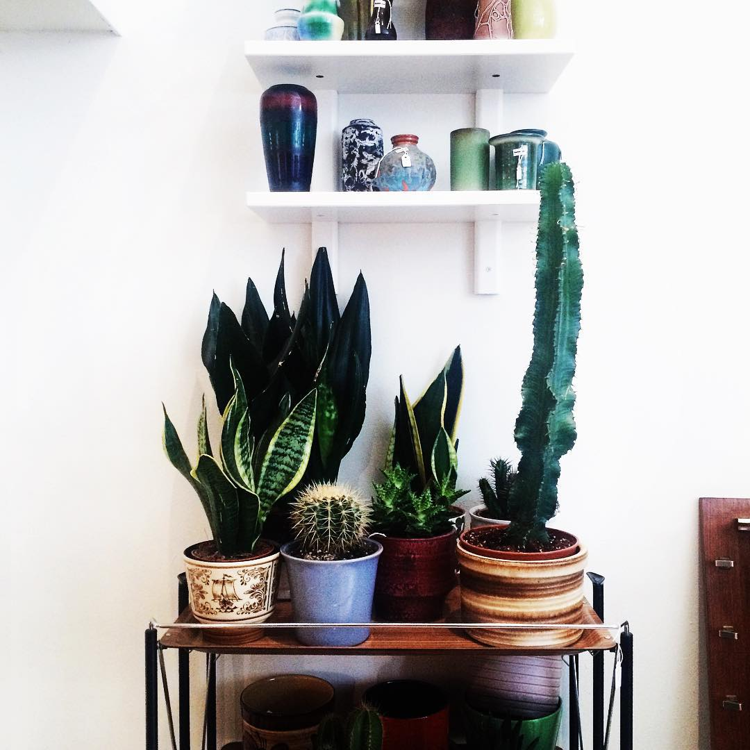 Hello vintage ceramics amp plants paradise! Discovered the vintage shophellip