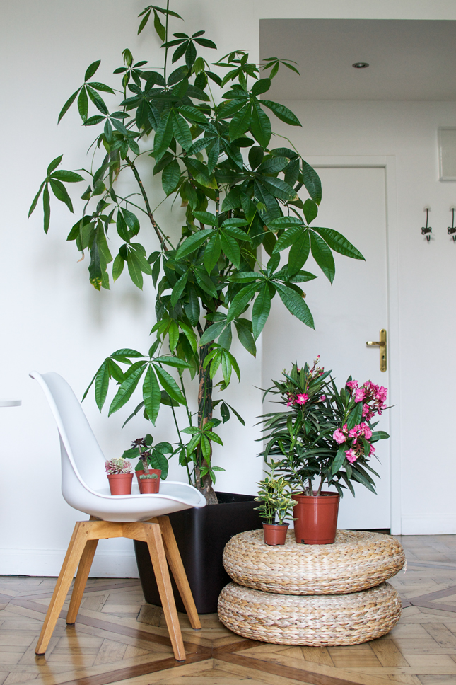 Urban jungle bloggers my plant gang airbnb apartment in for Interior designs with plants