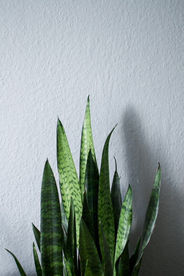 plants, indoor plants, houseplants, urban jungle bloggers