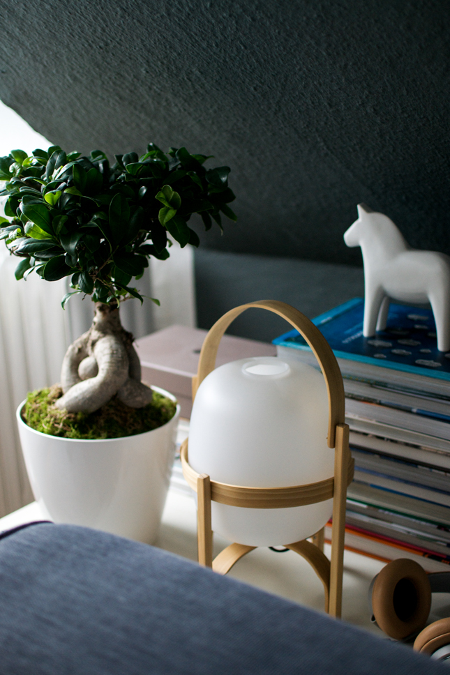 Plant of the Month, Ficus Ginseng, houseplants, indoor plants, Urban Jungle Bloggers, plants