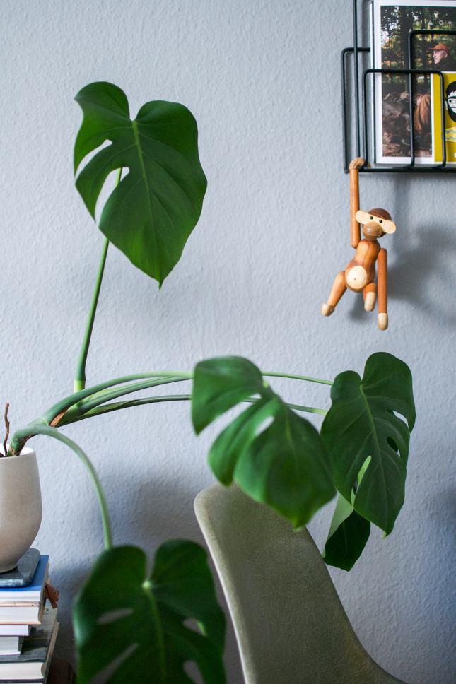plantcolorpop, plants, Monstera, color, houseplants, Urban Jungle Bloggers