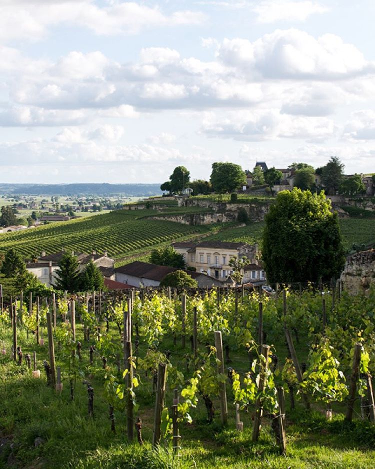 Wandering the vineyards of Saintmilion in southwestern France Join mehellip