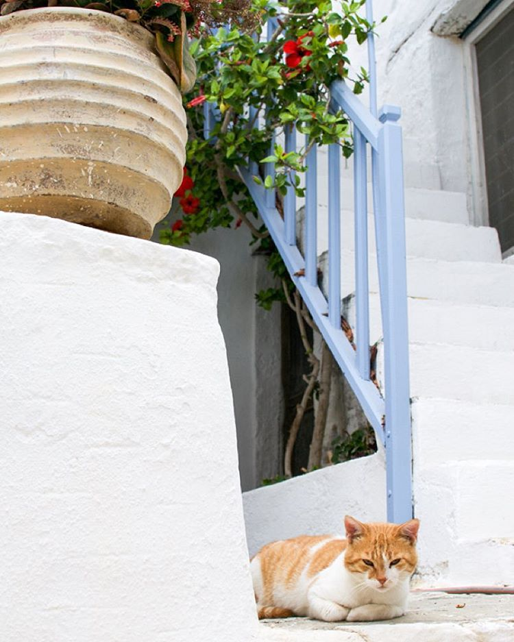 Greek impressions from Astypalaia now on the blog It doesnthellip