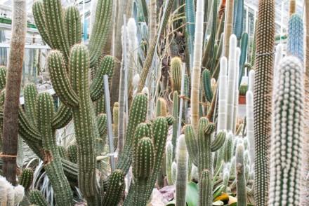 Succulent Plant Collection, Zurich, Sukkulenten Sammlung Zürich, Switzerland, Lost in Plantation, succulents, botanical gardens