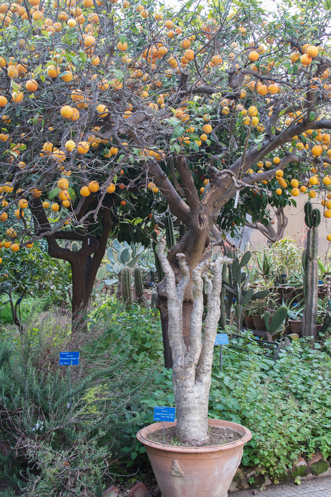 Orto Botanico di Palermo, Palermo, Botanical Garden, Lost in Plantation, Urban Jungle Bloggers