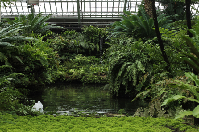 Lost in Plantation, Botanical Garden, Chicago, Garfield Park Conservatory, Urban Jungle Bloggers