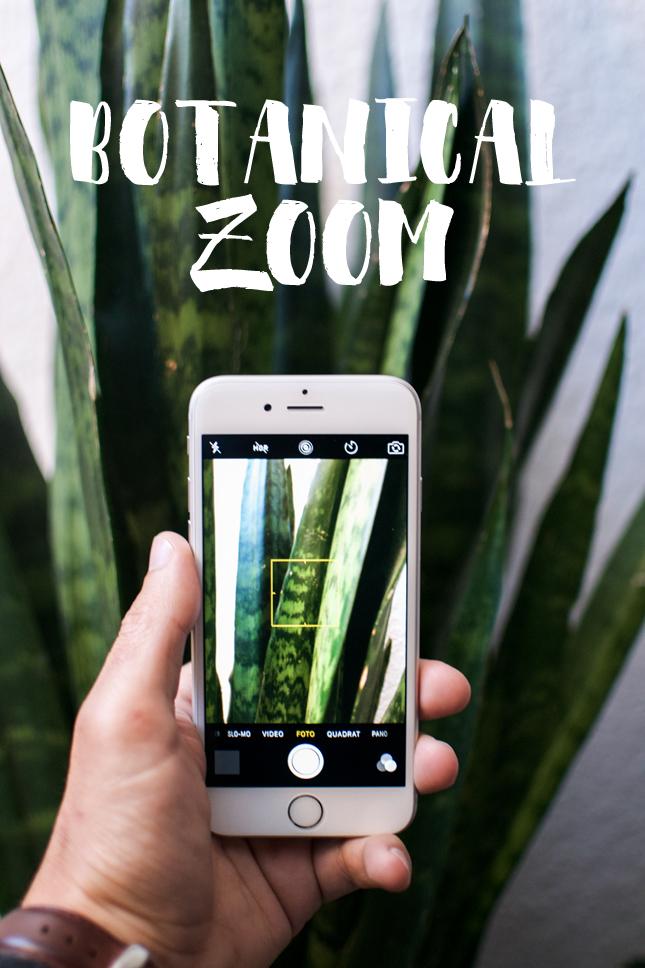 urbanjunglebloggers, botanical zoom, plants, houseplants, indoor plants, Urban Jungle Bloggers