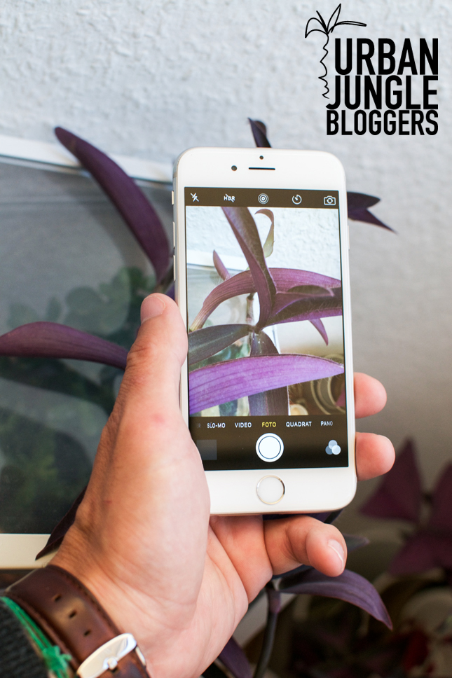 urbanjunglebloggers, botanical zoom, plants, houseplants, indoor plants, Urban Jungle Bloggers