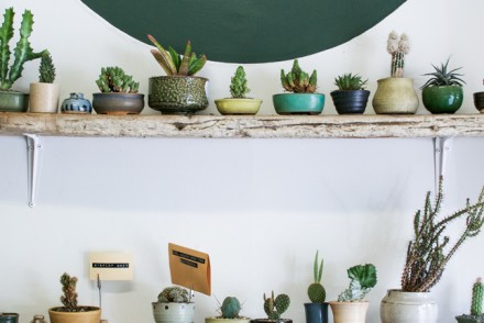 Bioattic, Auckland, plants, plant store, Urban Jungle Bloggers