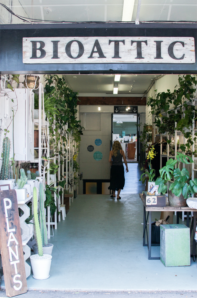 Bioattic, Auckland, plants, plant store, Urban Jungle Bloggers