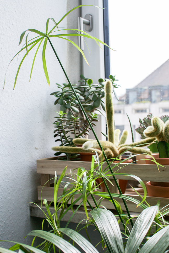 Urban Jungle Bloggers, plant styling, plants, plants and glass, glass vessels, houseplants