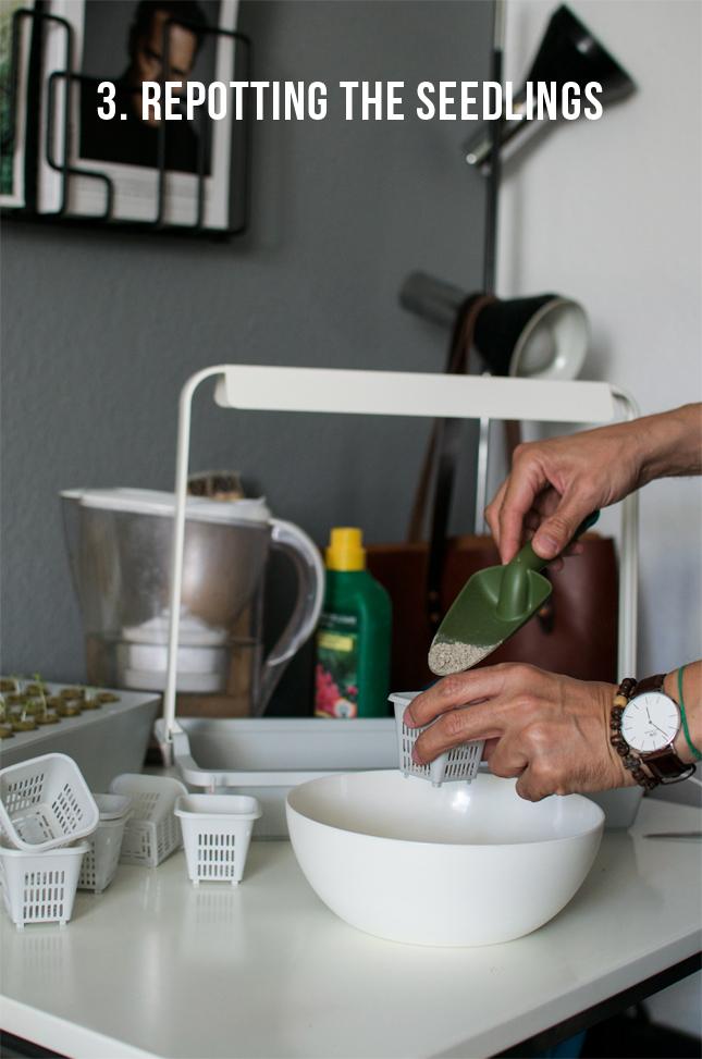 IKEA, hydroponic system, urban gardening, Krydda, Växer