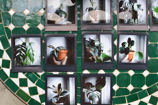 instax, plant guide, handmade, urban jungle bloggers, plants, plant care, green living, balcony