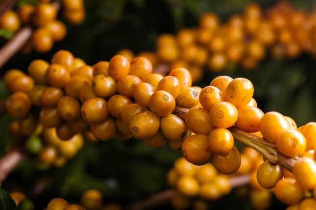 Segredo Amarelo, coffee, Tchibo, Brazil, Brazilian coffee, coffee moments