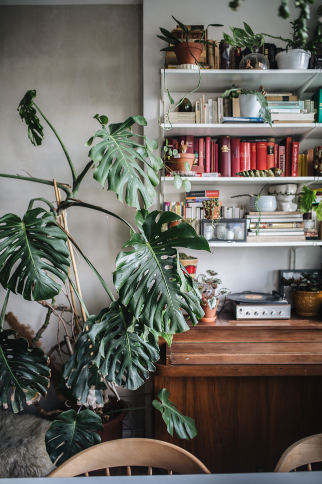 Plant Tribe, Urban Jungle Bloggers, new book, plant book, plant interiors, living with plants