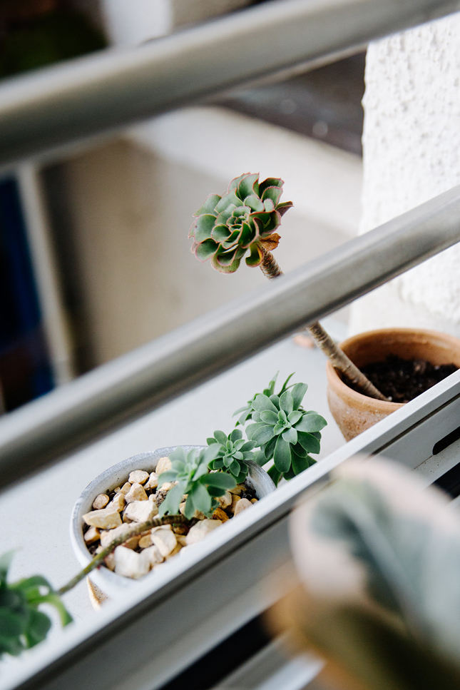 Tiny Balcony, balcony, urban jungle, new book, interior, interior design, interior styling