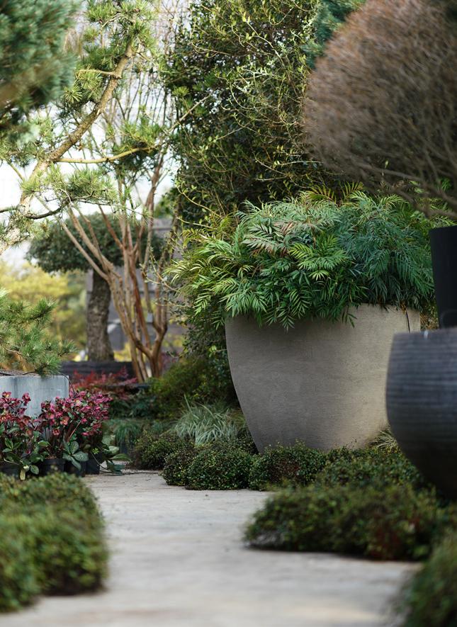 Domani, Solitair, planters, plants, nursery, Belgian design, pottery, plant pots, gardening, garden design